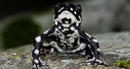 Colombia: Redescubren una rana venenosa que se creía extinta desde hace 30 años