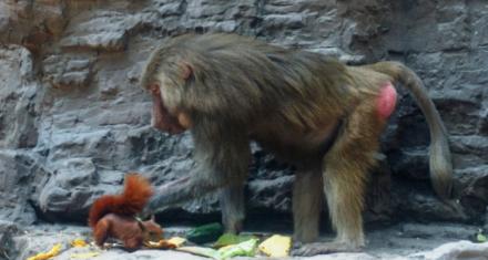 Colombia: La difícil situación en los zoológicos por el coronavirus