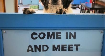 The Cuddle Club unites senior people and senior dogs