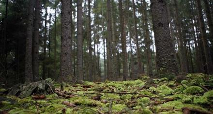 Nuestro ideal para la ley de bosques