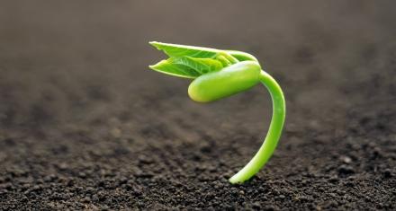 Un nuevo periódico que se convierte en plantas