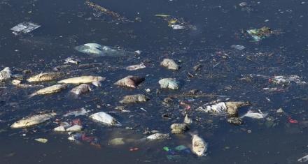 La Ciudad de Buenos Aires produce 161.473 toneladas de residuos plásticos al año