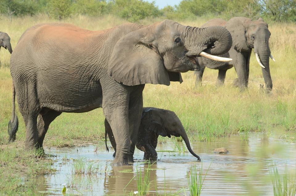 familiaelefantes