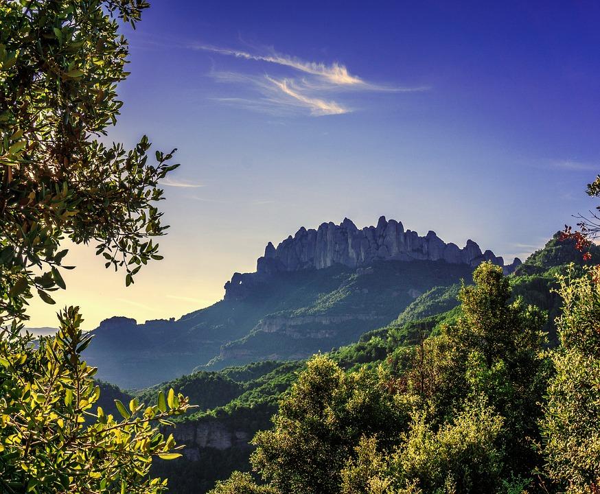bosquemediterraneo