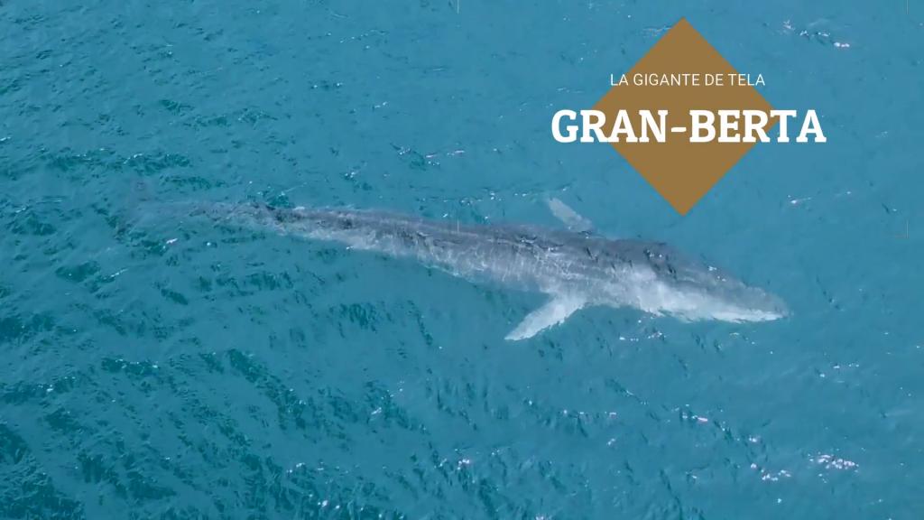 Crédito: Imágenes de vídeo tomadas de la página web del Tela Marine Research Center.