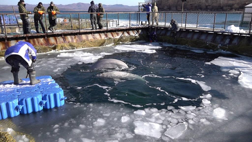 Foto tomada por la ONG Sakhalin Environment Watch a finales de enero.
