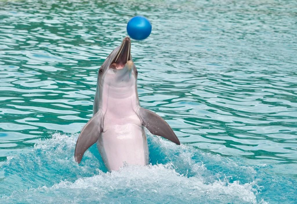 delfinjugando