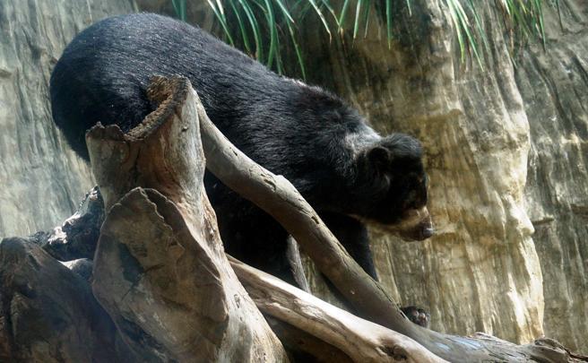 Crédito: Zoológico de Barranquilla / EFE