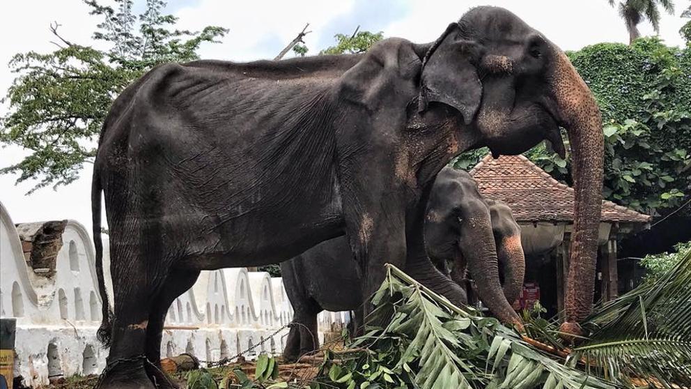 Crédito: Save Elephant Foundation