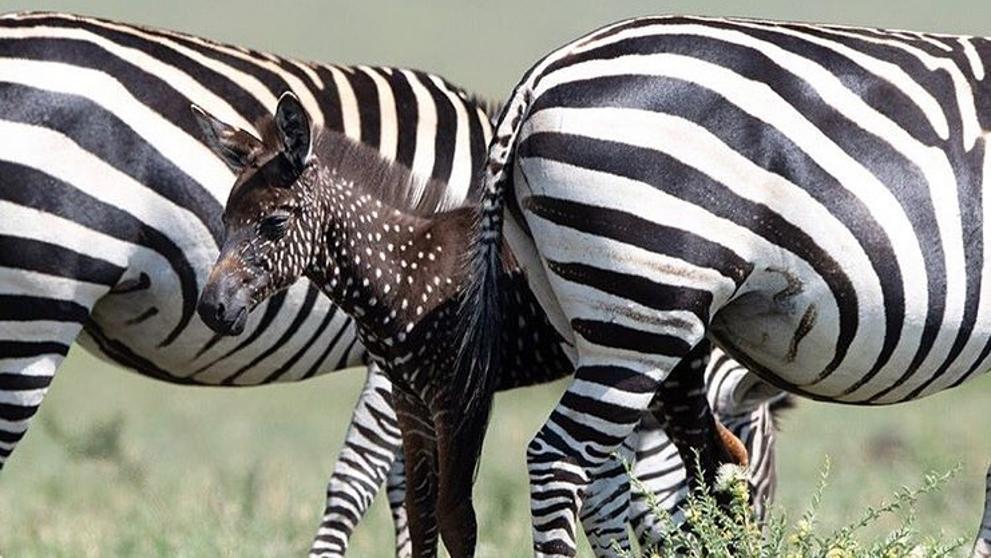 Crédito: Facebook/ Maasai Mara National Reserve