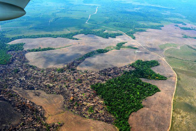 Crédito: Fundación para la Conservación y el Desarrollo Sostenible
