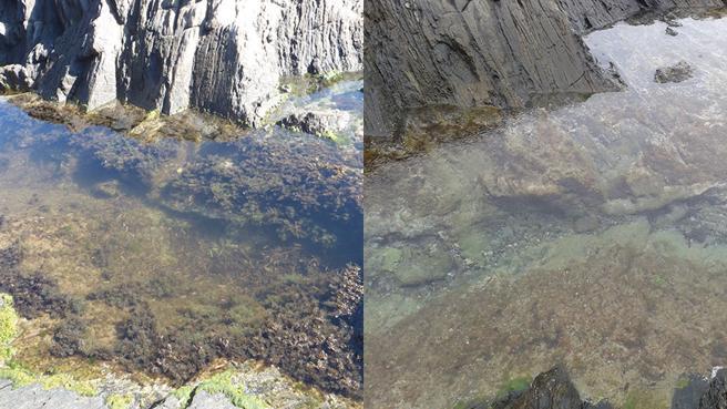 El Port de la Selva (Girona) Antes y después de una ola de calor. Crédito: Jana Verdura / La Vanguardia