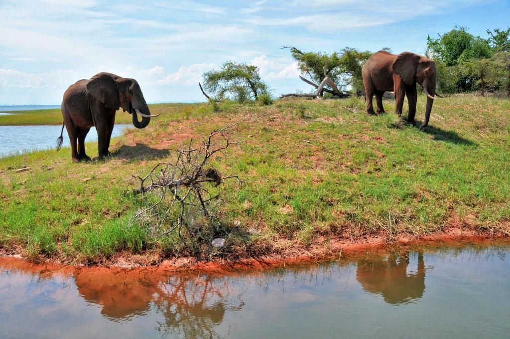 zimbabueelefantes