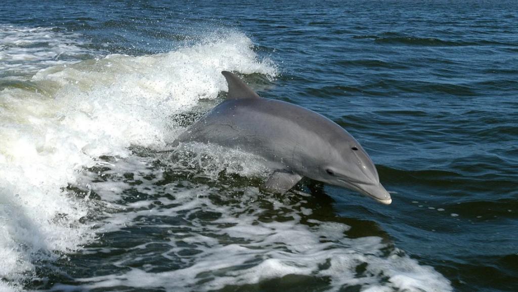 delfinnarizbotella