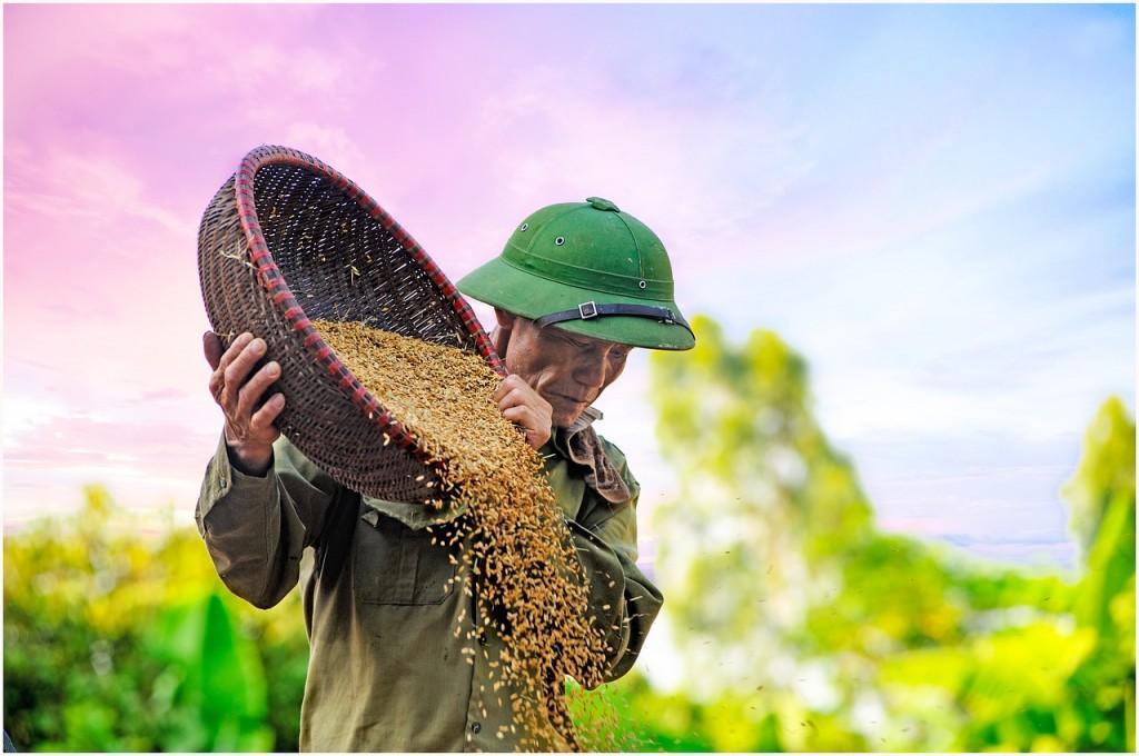 granjero