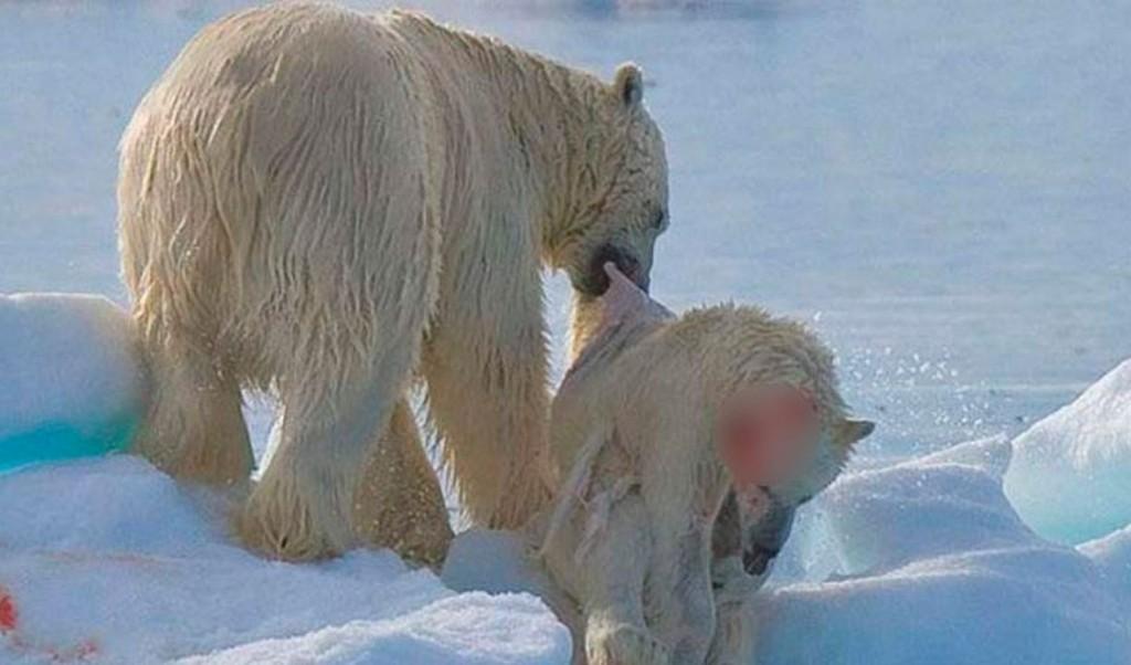 Imagen: Noticias Ambientales
