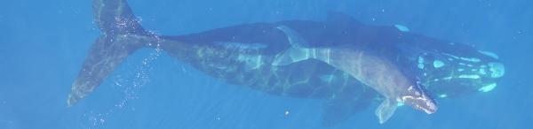 WA_Whales_half_hero_-_1680x410