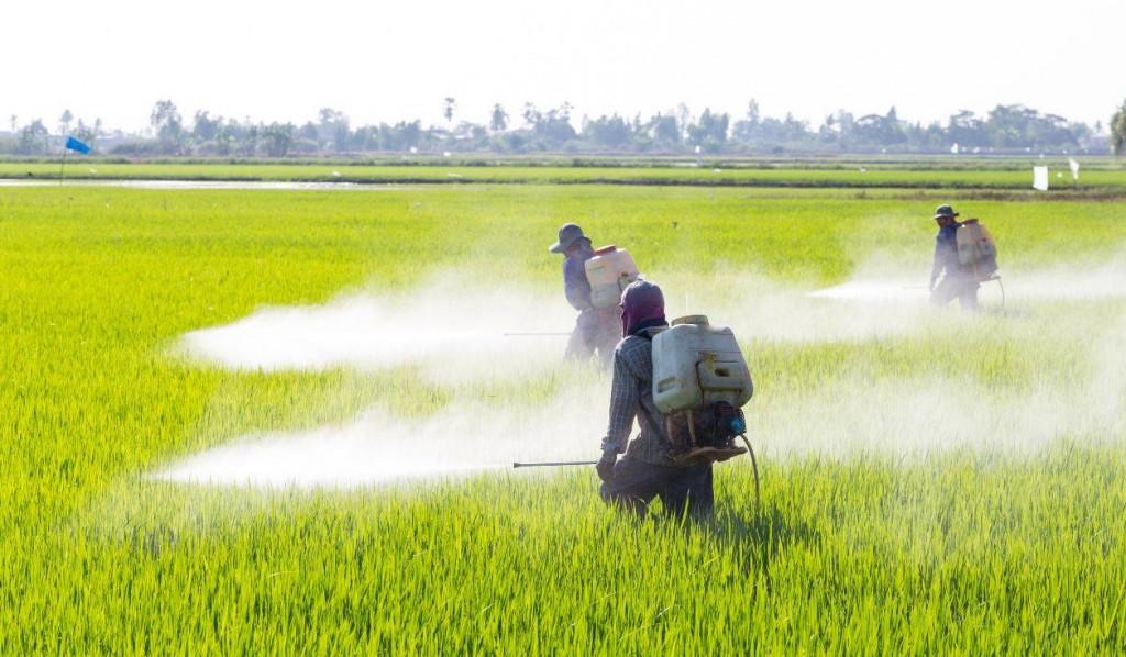 Glifosato-el-pesticida-que-enfrenta-a-los-cientificos