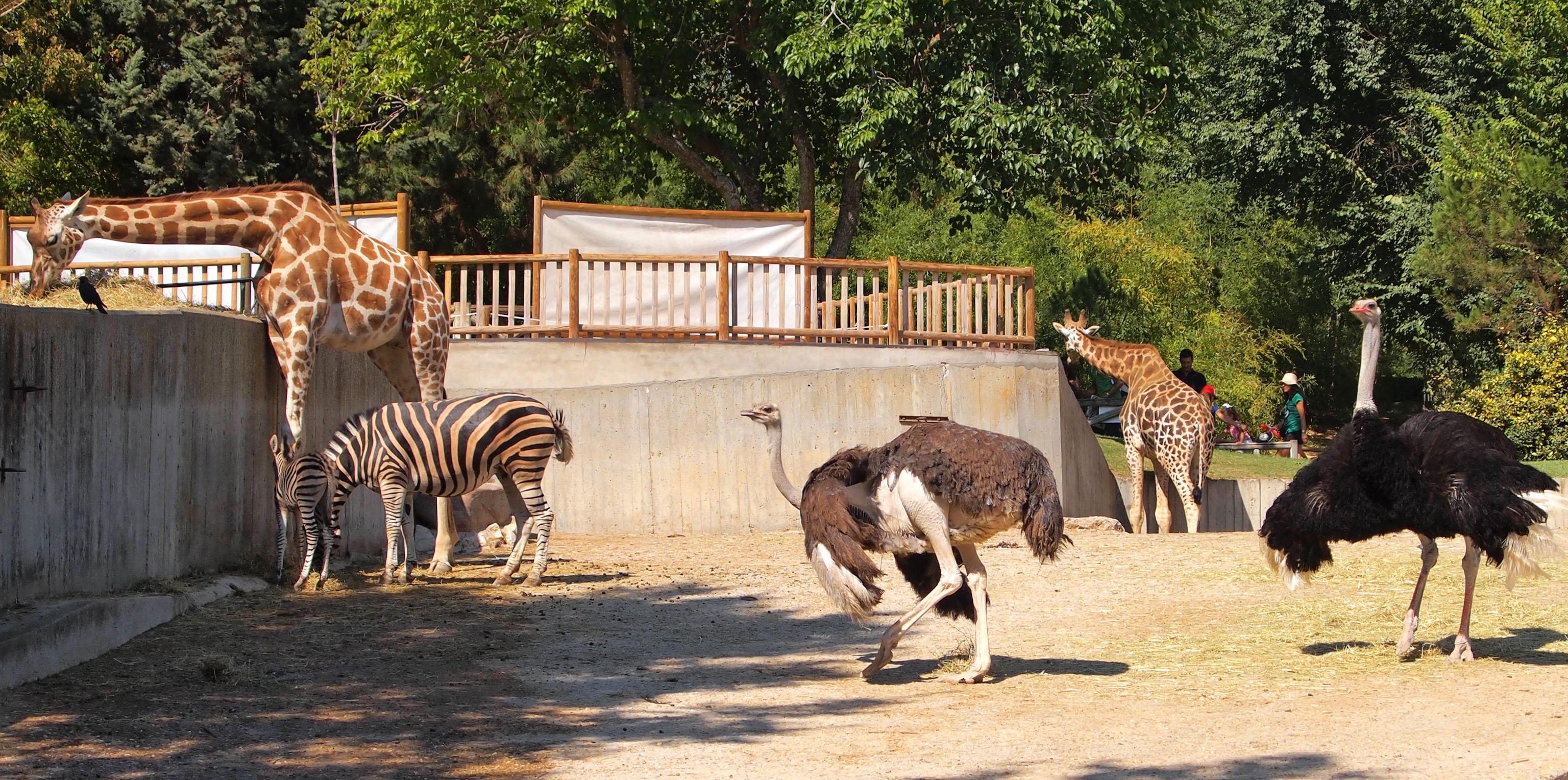 Willkommen im ErlebnisZoo  Erlebnis Zoo Hannover